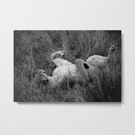 Relaxing Lioness; Black and White Nature Photography from Africa Metal Print