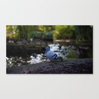 pigeon Canvas Prints featuring Pigeon by Elliott Kemp Photography