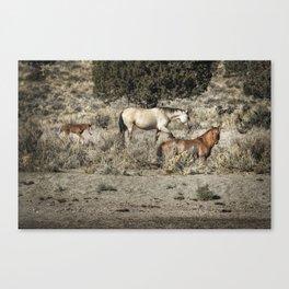 Safeguard This Tiny Foal Canvas Print