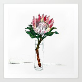 Day 71 - King Protea Art Print