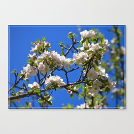 Apple Blossom Branch Canvas Print