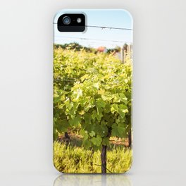 Rows of Young Grape Vines iPhone Case