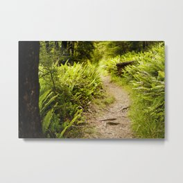 Forest Fern Path in New Zealand Metal Print
