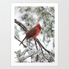 Wet Snow Cardinal (vertical) Art Print
