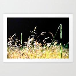 gold&black grass Art Print