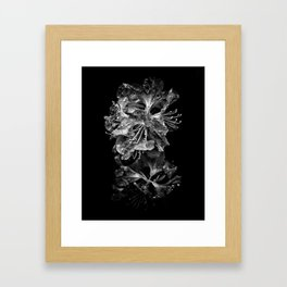 Backyard Flowers In Black And White 1 After The Storm Framed Art Print