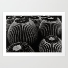 Botanical garden - Lanzarote, Jardin Cactus on the Canary Islands - Fine art print photography plants   Art Print