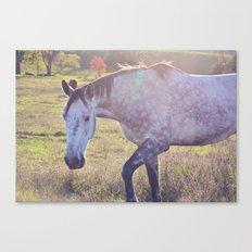 Star Horse Canvas Print