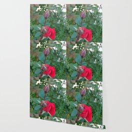 Blooming Among Buds Wallpaper