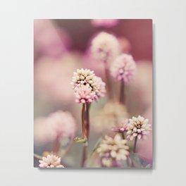 Star Flowers Fine Art Photography Metal Print