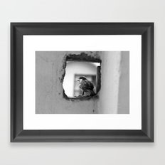 a sparrow Framed Art Print