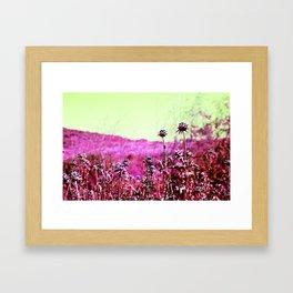 Thornberry  Framed Art Print