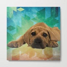 Boerboel puppy - South African Mastiff Metal Print