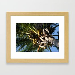 Palm at an interesting angle. Framed Art Print
