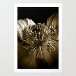 Sepia Poppy Portrait Art Print