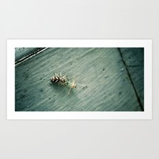 Zebra Spider Enjoys A Snack Art Print