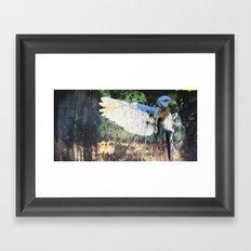 Woodpecker Framed Art Print