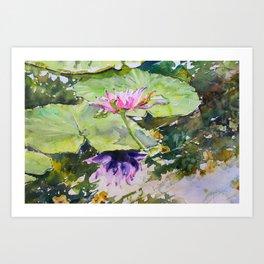 Flowering waterlily Art Print
