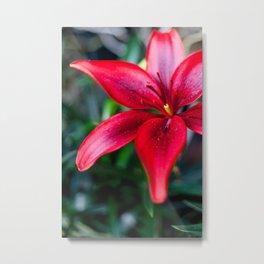 Wintergarden Flower II Metal Print