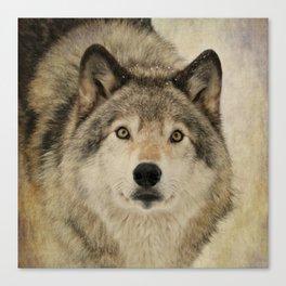 Timber Wolf Portrait Canvas Print