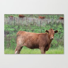 New Mexican Cow  Canvas Print