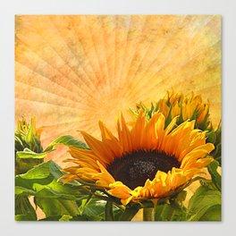 Good Morning Sunflower Canvas Print