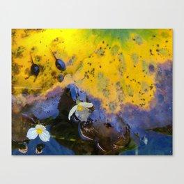 Two tadpoles Canvas Print