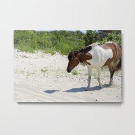 Wild Horse of Assateague Island Metal Print