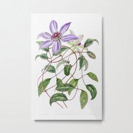 Violet clematis flower from Edwardss Botanical Register (1829-1847) by Sydenham Edwards John Lindley Metal Print