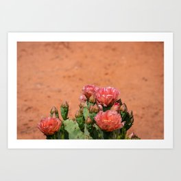 Cacti in Bloom - 5 Art Print