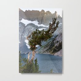 Whitebark Pine, Ansel Adams Wilderness, August 2020 Metal Print