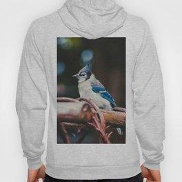 Blue Jay (Color) Hoody