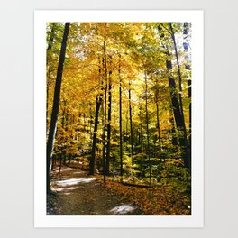 Sunny Autumn Path Art Print