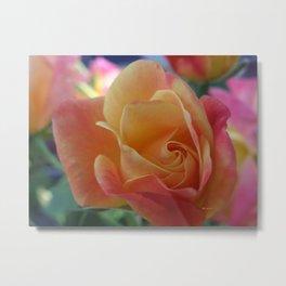 Rose Shade Pastels Metal Print