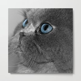 Grey Persian Cat with Blue Eyes Metal Print
