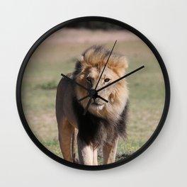 Kalahari Lion King Wall Clock