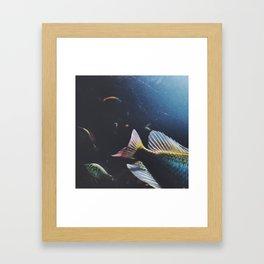 fishy celebration Framed Art Print