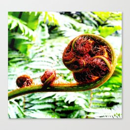 Fern Curl Canvas Print