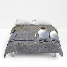 King Penguins Comforters