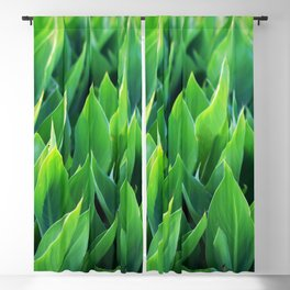Green leaves so beautiful. Blackout Curtain