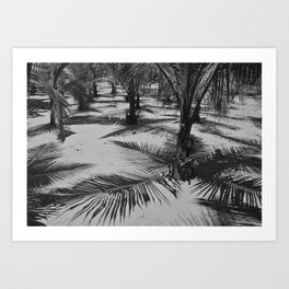 Palm Shades Art Print