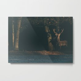 Red deer stag at edge of forest lit by sunlight. Metal Print
