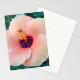 Hibiscus After the Rain Stationery Cards