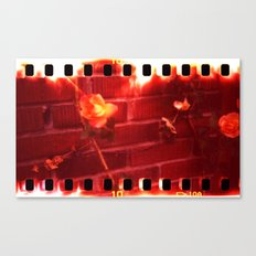 holga film x-processed, roses with brick Canvas Print