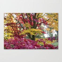 Acer Colours Canvas Print