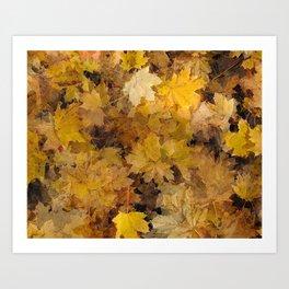 Maple Leaves 2013 Art Print