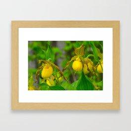 Ladyslippers Framed Art Print
