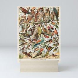 Adolphe Millot - Oiseaux espèces utiles 02 - French vintage ornithology poster Mini Art Print