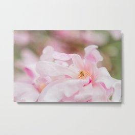 Magnolia In Blush Metal Print