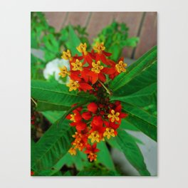 Orange and Yellow Flowers Canvas Print